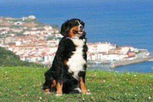 hund-mit-meer-im-hintergrund