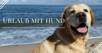 urlaub-machen-mit-hund