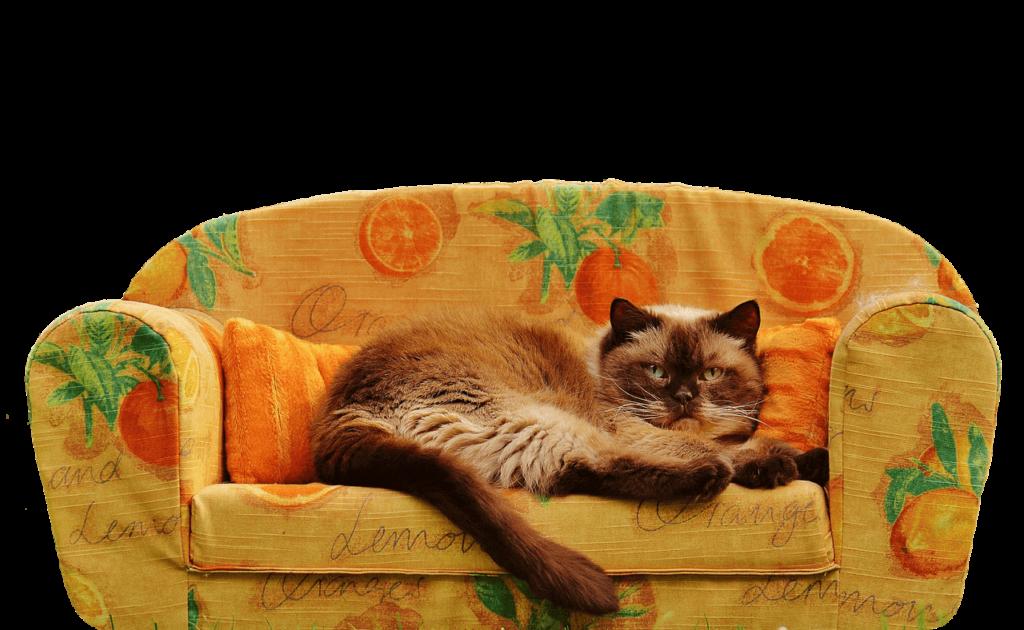 sofa-mit-katze-darauf